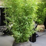 Ziemia dla bambusa – jak przygotować odpowiednią mieszankę