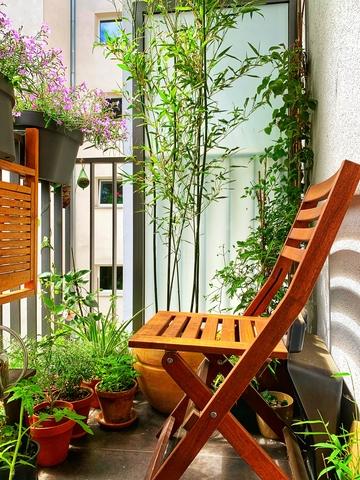 bambusy w donicy na balkonie