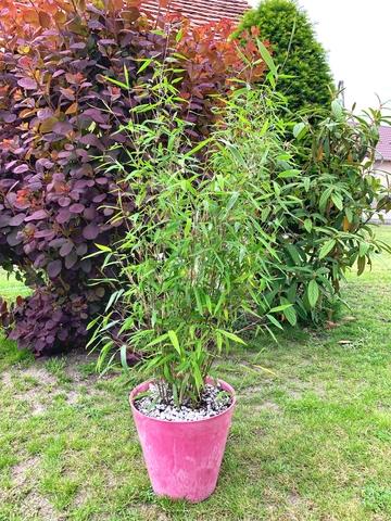 donica dla bambusa