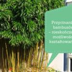 Przycinanie bambusów – nieskończone możliwości ksztaltowania