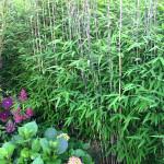 Rośliny do posadzenia z bambusem