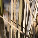 Zimowe uszkodzenia palmy