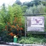 6 metrowe bambusy opolskim Zoo (2011)