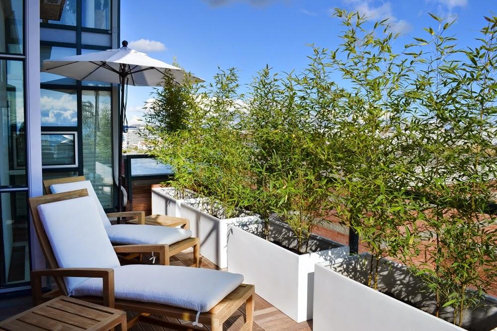 Bambus w donicy na balkonie lub tarasie