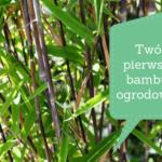 Bambus ogrodowy dla początkujących