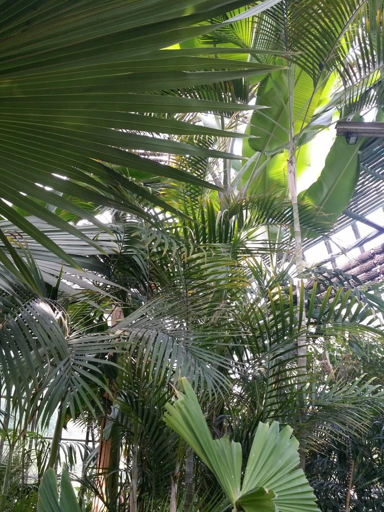 palmiarnia ogród botaniczny UJ
