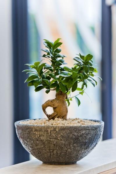Bardzo dobra Top 10 - najlepsze rośliny do biura DP11