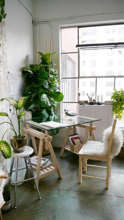 rośliny do biura kwiaty
