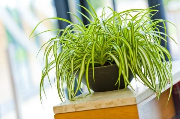 Niewiarygodnie Top 10 - najlepsze rośliny do biura PU84