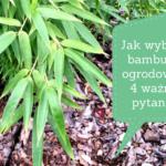 Jak wybrać bambusy ogrodowe? 4 kluczowe pytania