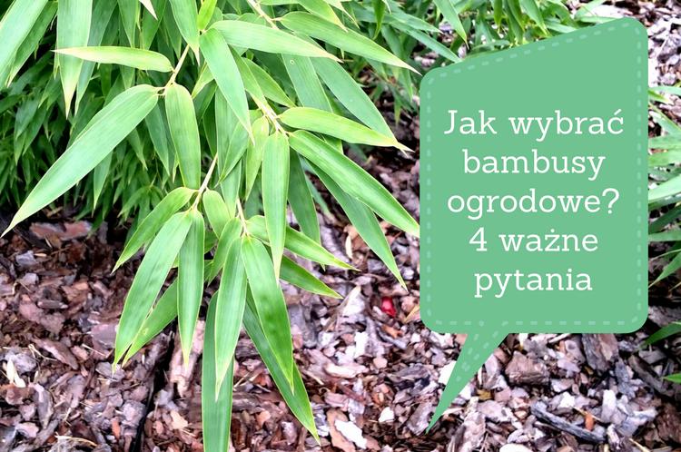 jak-wybrac-bambusy-ogrodowe-4-wazne-pytania