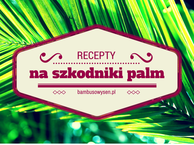 szkodniki palm