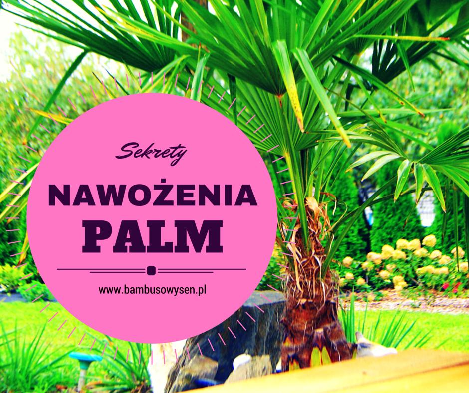Sekrety nawożenia palm zielone liście