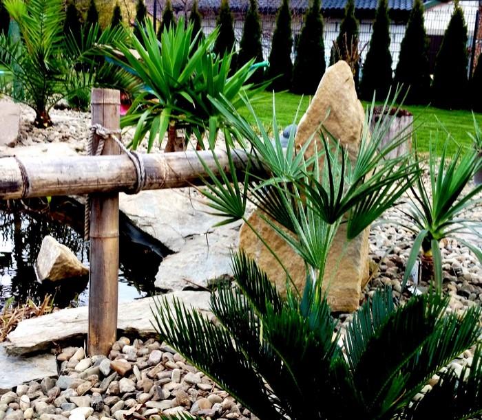 nawożenie-palm