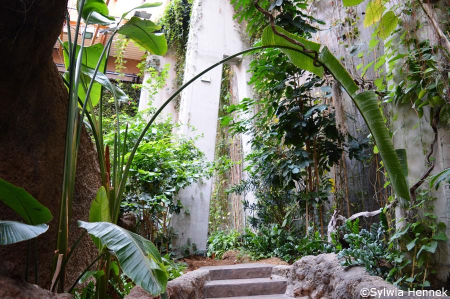 Zielone ściany a Afrykarium