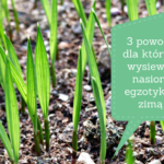 3 powody, dla których polecam wysiew nasion zimą