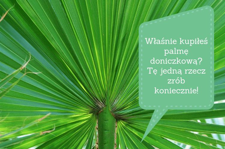 Właśnie kupiłeś palmę doniczkową? Tę jedną rzecz zrób koniecznie!