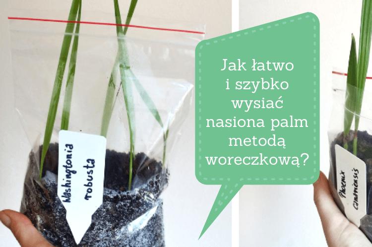 Jak łatwo i szybko wysiać nasiona palm metodą woreczkową