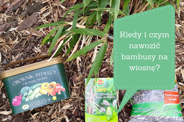 Kiedy i czym nawozić bambusy wiosną?