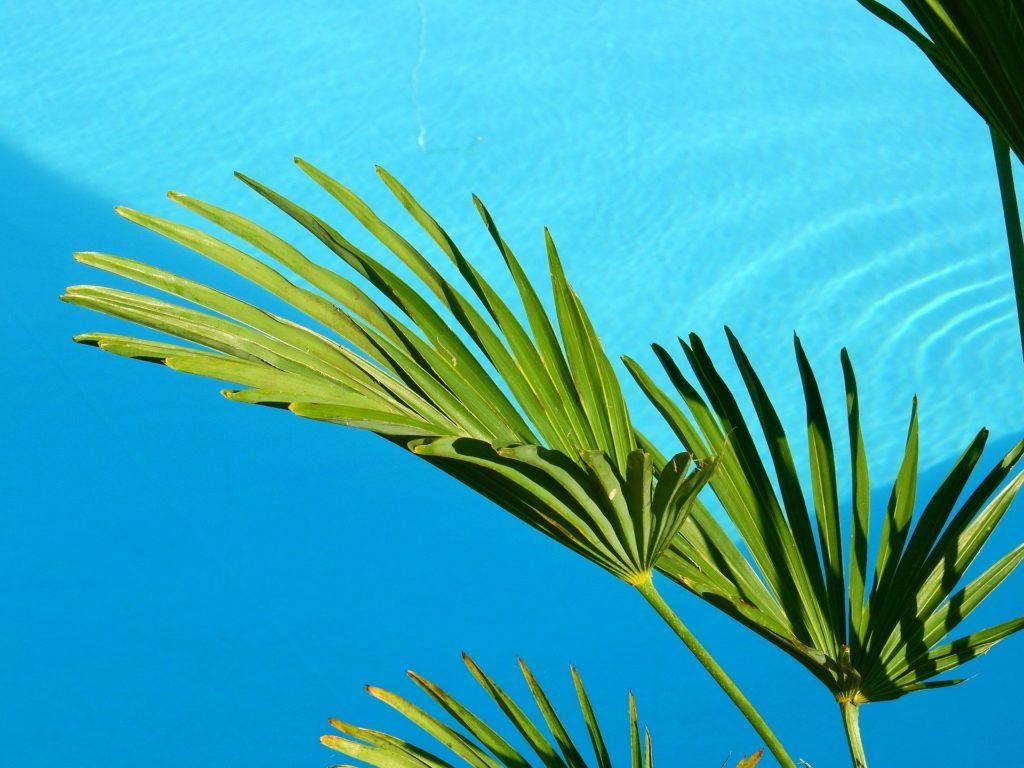 Jak podlewać palmę żeby zdrowo rosła