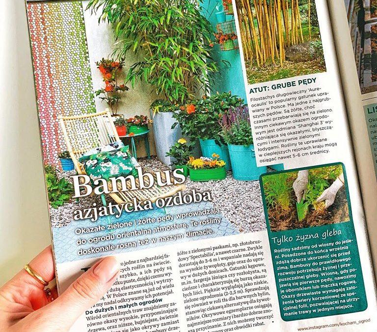 """Poczytaj o bambusach w sierpniowym numerze """"Kocham Ogród"""""""