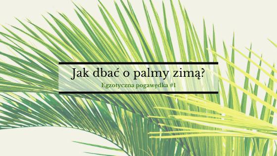 Jak dbać o palmy zimą? | Egzotyczna Pogawędka #1