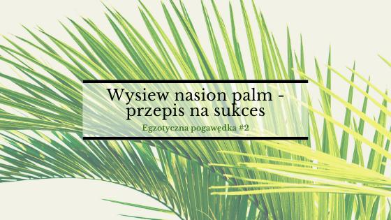 Wysiew nasion palm – przepis na sukces | Egzotyczna Pogawędka #2