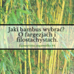 Jaki bambus wybrać – o fargezjach i filostachysach | Egzotyczna Pogawędka #4