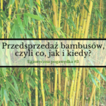 Przedsprzedaż bambusów, czyli co, jak i kiedy?  | Egzotyczna Pogawędka #3