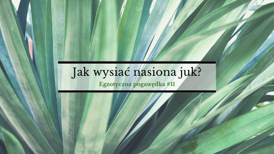 Jak wysiać nasiona juk i agaw? | Egzotyczna pogawędka #11