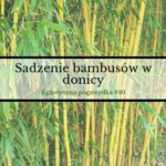 Sadzenie bambusów w donicy   Egzotyczna pogawędka #10