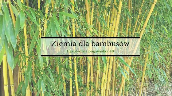 Ziemia dla bambusów | Egzotyczna Pogawędka #8
