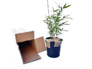 Jak rozpakować paczkę z bambusem?