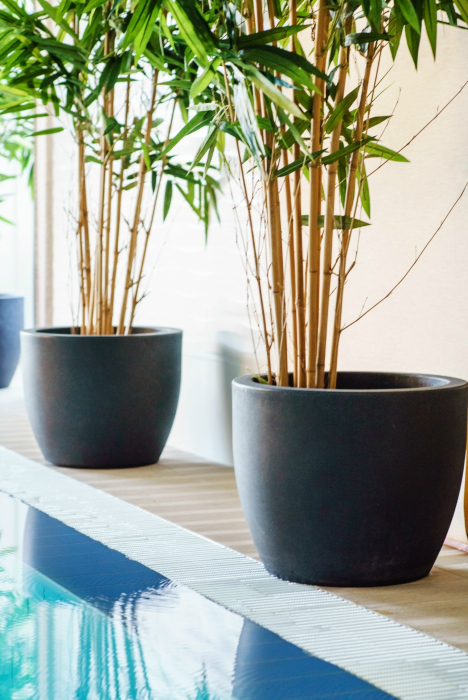 Bambusy w pokoju wyglądają pięknie, ale niestety tylko krótko
