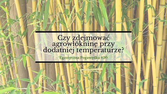 Czy zdejmować agrowłókninę przy dodatniej temperaturze? | Egzotyczna Pogawędka #30