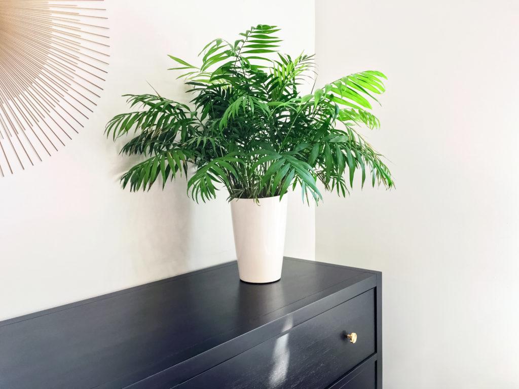Doniczka dla palmy - jaką wybrać?