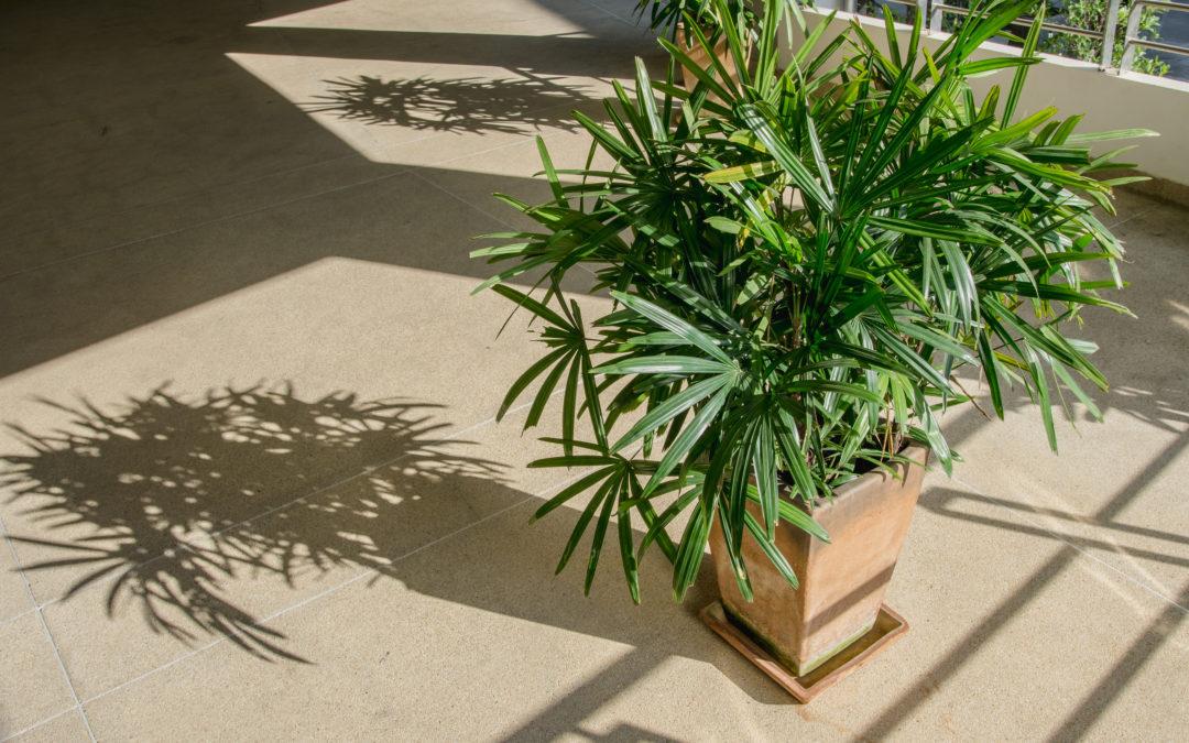 Donica dla palmy – jaką wybrać?