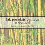 Jak posadzić bambus w donicy? | Egzotyczna Pogawędka #20