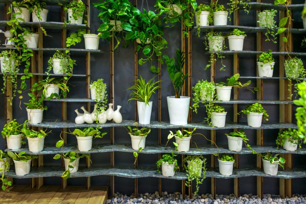 sklep internetowy z doniczkami i roślinami
