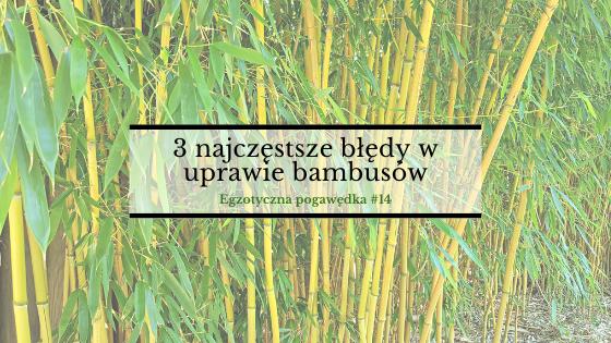 3 najczęściej popełniane błędy w uprawie bambusów | Egzotyczna Pogawędka #14
