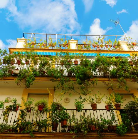 Dżungla na balkonie - 5 podpowiedzi jak osiągnąć taki efekt