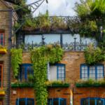 Dżungla na balkonie – 5 podpowiedzi jak osiągnąć taki efekt