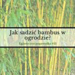 Jak sadzić bambusy w ogrodzie?   Egzotyczna Pogawędka #13