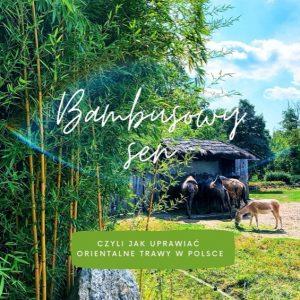 e-book o bambusach