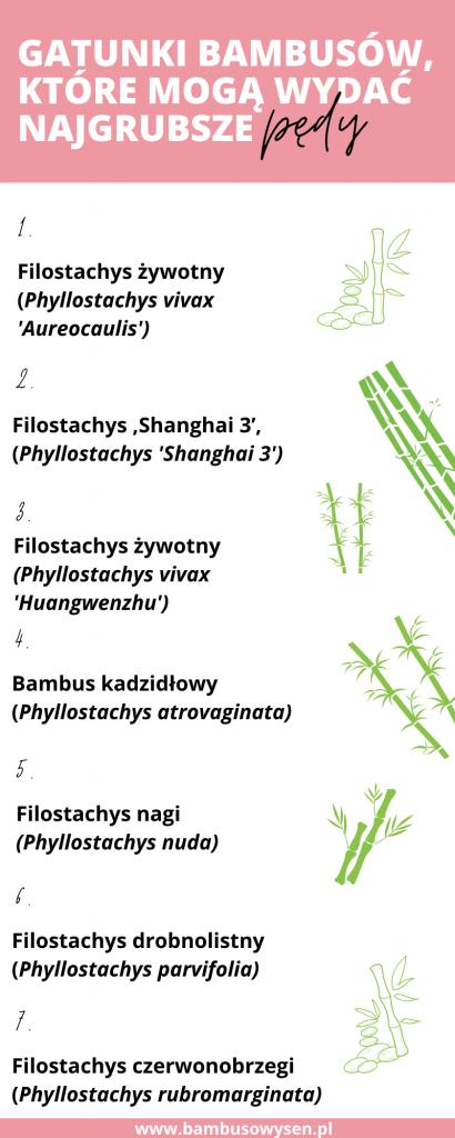 gatunki bambusów, które mogą wydać najgrubsze pędy