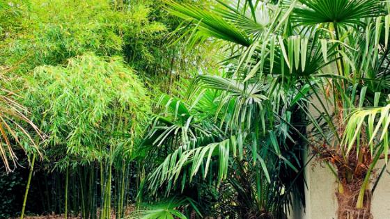 Palmy i bambusy w Taczanowie – egzotyczny ogród w Wielkopolsce