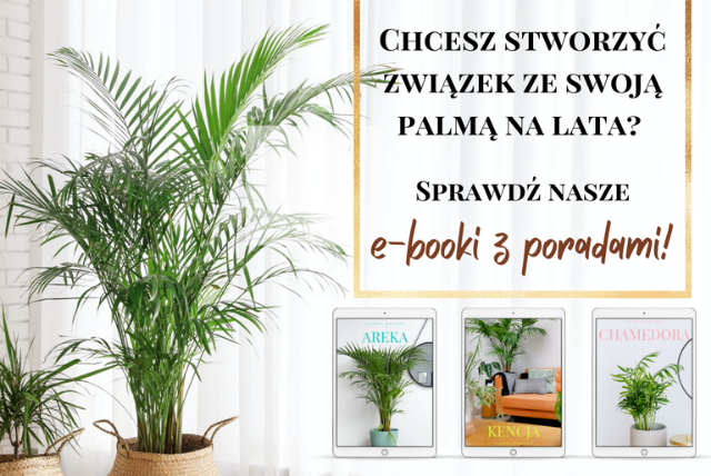 Jak powstawały e-booki o uprawie palm doniczkowych?