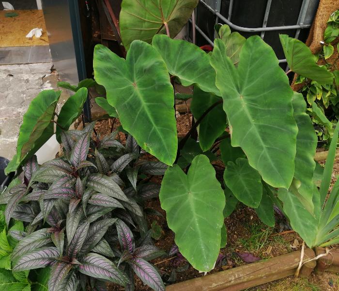 egzotyczny ogród rośliny egzotyczne
