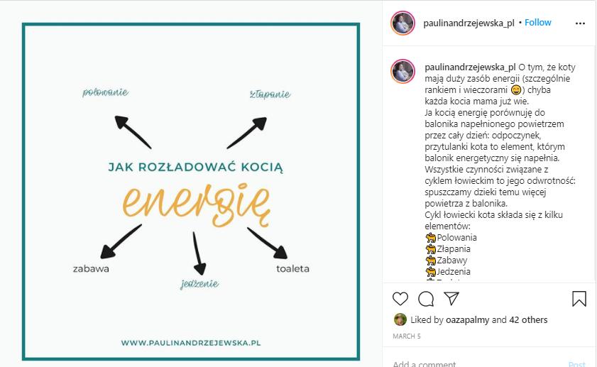 jak rozładować energię kota Paulina Andrzejewska behawiorystka