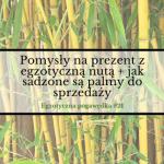 Pomysły na prezent z egzotyczną nutą + jak sadzone są palmy do sprzedaży | Egzotyczna Pogawędka #21